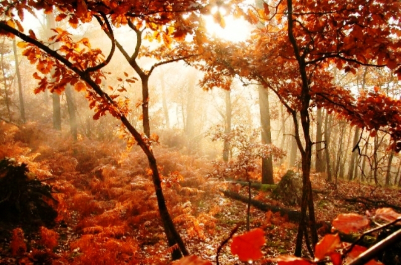 *Poème - L'automne par Alphonse de Lamartine   (1790-1869)*